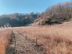 遊歩道があり、軽く散策するには十分で視界にビルや人工物がない軽井沢の自然を楽しめました