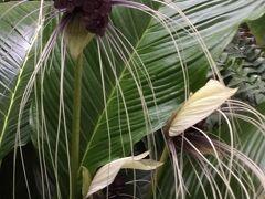 寄ってみたかったところ。それは世界を旅する植物館。こじんまりしているけど、植物に目移りしながらエデンの園ってこんな所だったんじゃないかなぁって思える楽しさがある。何?この花?