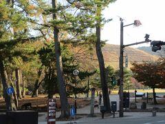 信号を渡って、いざ!  奈良公園に到着。  この一角に東大寺が有るの?