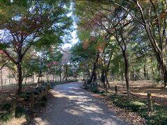 歩いているとまた突き当りで左右に道が出てきて 左に行くと紅葉が多い散策道、右に行くと常緑種の多い場所で 地図を見るととお薦めの散策道とはなっていませんでしたが 散策できるので行ってみました。