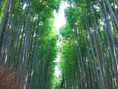 「竹林の小径」に到着 嵐山公園はちょっとしたアップダウンがありますが 緑にかこまれた道を行くのは気持ちが良くて、朝のお散歩にはぴったりでした。