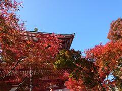 成田山公園まわります!! ちょうど紅葉まつりをやっているみたいですとても見頃です!