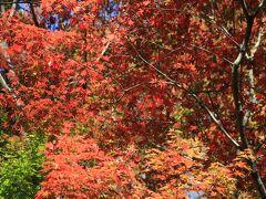 先週よりは紅葉は進んでいますが、まだ青々としたモミジも多かった