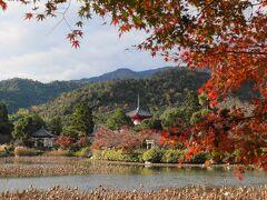 大沢池の向こう側から見た、心経宝塔。