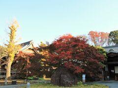 先ず祐天寺へ 11/21よりモミジの紅葉は進んでいた