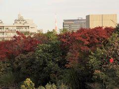 目黒区総合庁舎の屋上にある目黒十五庭へ モミジの紅葉の先に東京タワー