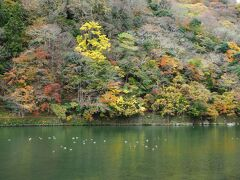 嵐山も良いカンジで色づいていますね。