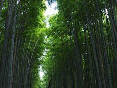 案の定、嵯峨野に近づくにつれ人が多くなり人気の竹林の小径は前回ほどではないですが、かなりの人出でした。 午後からは嵯峨野を散策する予定ですが、どんな風景が待っていてくれるでしょう?