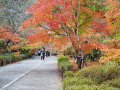 次は二尊院 総門を抜けた先に広がる、真っすぐに伸びた参道は「紅葉の名所」として人気のスポットですが、訪れた時は残念ながらトンネルにはなっていなかったので、片側の色付いた木々をメインにパチリ  本当は下記サイトの2枚目の写真のような光景を期待していたんですけどね。。。 https://nisonin.jp/visit/