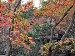 風情ある草庵と苔庭、そこに散ったモミジが美しい景観を生み出すお寺です。常寂光寺とここには紅葉を撮りにきたいと思っていました。