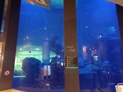 ターミナルにはアクアリウムがあって魚やウミガメが泳いでいました。