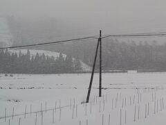 雪が強くなってきた