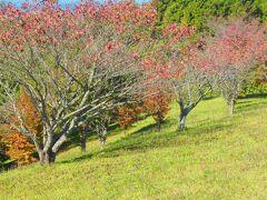 山頂付近はサクラの名所です。 トップ写真も山頂付近のサクラ並木です。