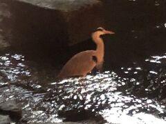 土佐堀川にこんなにきれいな鳥が。。。  なんだかいいものを見た感があって、3人でしばし眺めていました。3人とも鳥の名前はわからず(*_*;