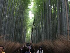 「トロッコ嵐山」駅で下車して渡月橋に向かって歩く。竹林の道も人出が多い
