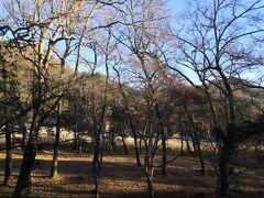 月の石もみじ公園 秋は 紅葉がとても綺麗な場所だ 向こうの方に川も見える