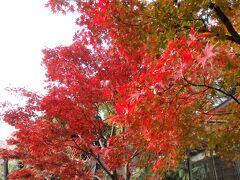 予約が取れなかった日もあるけど、11月からほぼ毎週日曜に上野動物園に出かけていた私。  動物を見るのが一番の目的ではあるけど、園内の紅葉が綺麗なので、紅葉を撮ってしまうことも~。