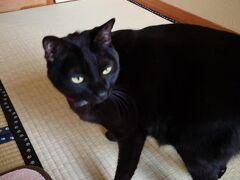 そして宿に到着。 海風荘。 猫ちゃんがいるのです。 部屋の戸を開けてるとさっそく来ました。