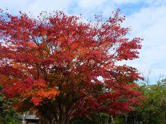 川湯温泉に戻って来ました! 川湯神社前の紅葉が綺麗!