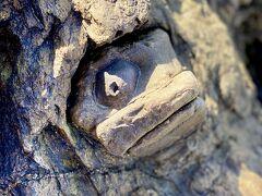 ミーバイ岩