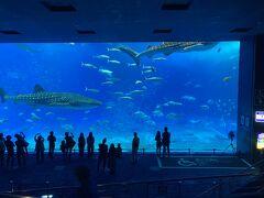 9月に行けなかった美ら海水族館をついに訪問! mami①は何度か訪れてるけれど、mami②は初めてです。 大きな水槽をジンベイザメが優雅に泳ぐ姿は圧巻。