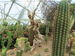 Flower Domeには、サボテン、多肉植物がたくさんありました