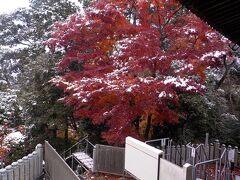 12月の中旬でもモミジがとてもきれいです。