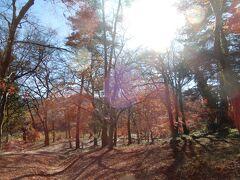 紅葉の名所 もみじ公園へ ここはほとんど終わっていた。