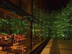 ガラスの面積が広くライトアップされた針葉樹が綺麗だ
