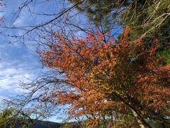 紅葉が見頃。今年は紅葉を楽しむ機会が多かった気がします。
