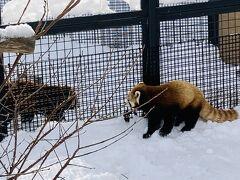 暖かい所に住んでいる動物は屋内に。 寒くても平気な動物は外に。 レッサーパンダは雪の中で元気!