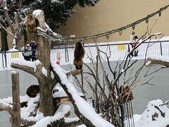 雪景色が似合う、ニホンザル。