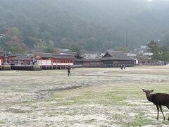 嚴島神社は水がひいていたのでこんな感じ。