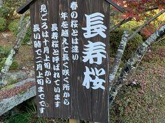 西明寺から移動して百済寺へ来ました