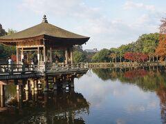 ●浮見堂@奈良公園  奈良公園を代表するスポットです。 早朝からガイドさんが案内されていました。
