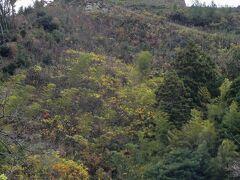 足立美術館から車で5分ほど、100名城スタンプを押すために「月山富田城(がっさんとだじょう)跡」へ。山陰・山陽を治めた尼子氏の本城です。 大手門跡駐車場まで行きましたが、ここから本丸でも往復1時間かかるとのことで今回は登城を断念。下から見ても石垣がカッコいいお城でした。