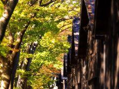 はい!これが山居倉庫お約束のカットですね! 紅葉真っ盛りとまではゆかないもののやや紅黄帯びた葉が 路上に舞っております!