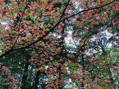 赤と緑が混ざった紅葉も綺麗ですね
