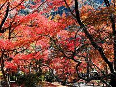境内には、どれほどの紅葉の木々があるのでしょうね。