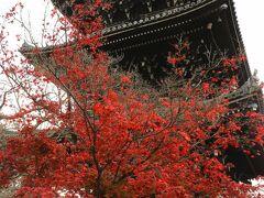 紅葉だけではなく、四季折々の良さを感じられるお寺のようです。