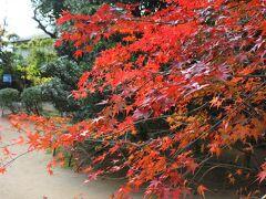今回寺社を巡り気づいたことの一つが、本当に沢山の種類のもみじが植えられていることです。 そのため師走でも鮮やかな色どりを残している木が、たいていの寺社に一本くらいはあり、観光客が集まって撮影していました。