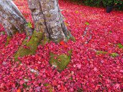 真っ赤なもみじの絨毯。 なかなかのインパクト。