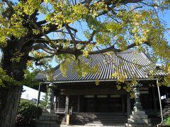 本伝寺。 樹齢300年以上という銀杏が散らずに残っててくれました。