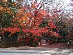 この時点でもう結構足が痛い…。 奈良公園って…私が想像していたよりもめちゃ広い。  二月堂から春日大社目指して歩く。 鹿のふんをよけながら歩くから余計に疲れる(笑)