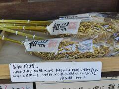 次に新熊野神社。大谷さんから出て東大路通をひたすら南に移動するとある。吉兆稲穂と呼ばれる稲穂があった。一粒が万倍になるという願いがこめられてるらしい。これは玄関に飾ったりするもの。
