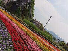 風車とカラフルなお花畑