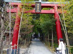ここ、来宮神社です。  この神社は平安初期の征夷大将軍だった坂上田村麻呂公は戦の勝利をこの神前で祈願したと伝えられています。  その後、各地に分霊し現在では全国四十四社の総社として、信仰を集めているそうです。