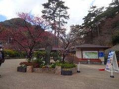 そして、来宮神社を後にした我々は第三の目的地、熱海梅園にやってきます。  さすがに1月も18日では咲いていないかも?