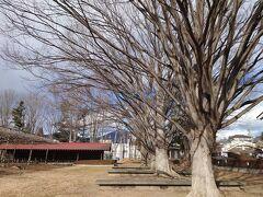 撮影を終え、再び国分寺公園へ。
