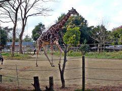 そして八木山動物園へ・・山の上の広い動物園です